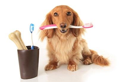 ¿Hay que lavarle los dientes al perro? - Espacio Dental Jaén
